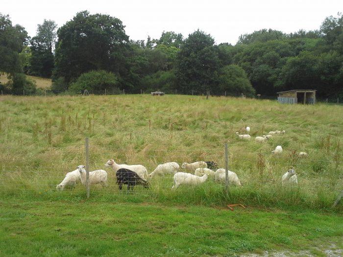 A les moutons à P P 04 07 16