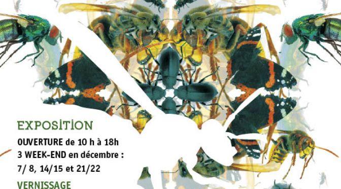 Exposition «Etre insecte» à Cléguérec