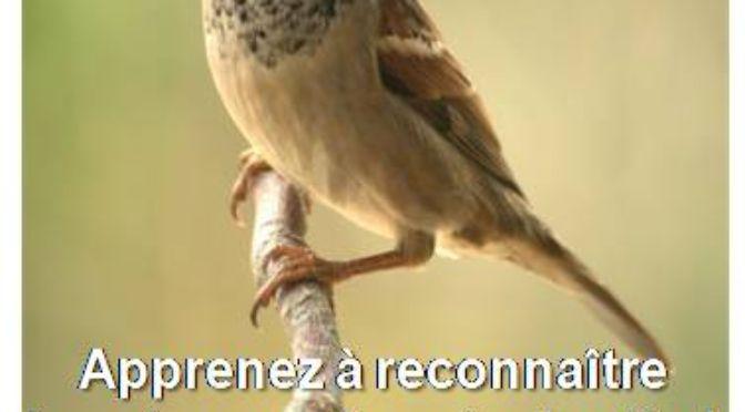 Dimanche 28 Février : Reconnaître les oiseaux